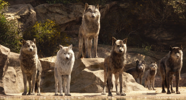 Akela_and_the_Wolf_Pack_(Disney_2016)